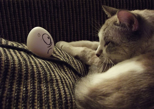 Cat and Egg